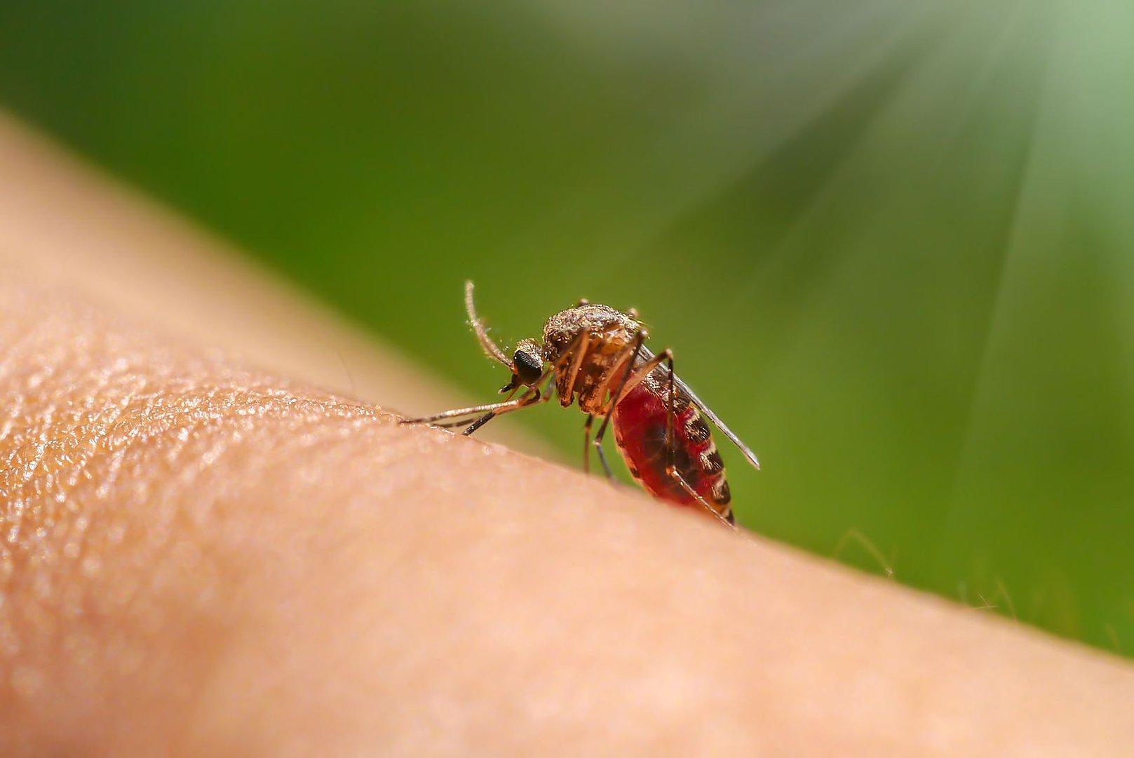 сосущие кровь человека насекомые